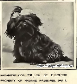 https://dogs-history.ru/wp-content/uploads/2017/08/23.png