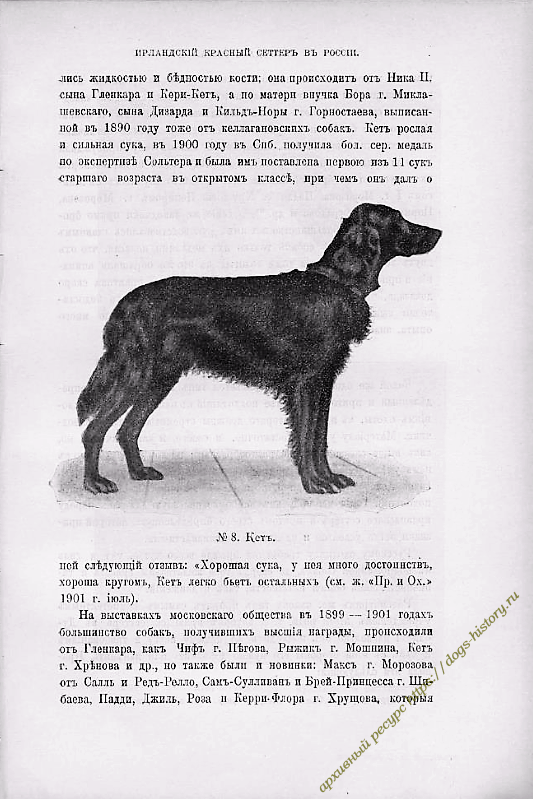https://dogs-history.ru/wp-content/uploads/2020/03/10-1.png