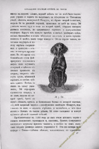 https://dogs-history.ru/wp-content/uploads/2020/03/5-2-199x300.png