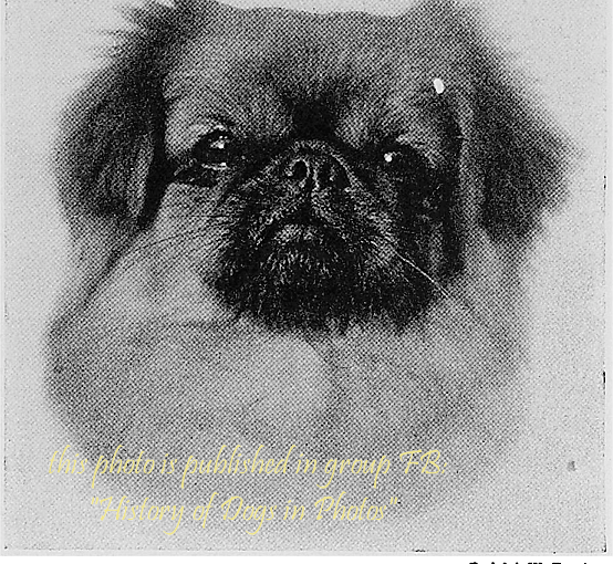 """""""Some Chinese Dogs: Pekingese and Chow"""" by T. C. Turner"""
