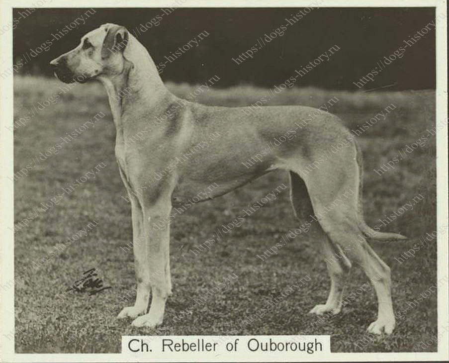 OUBOROUGH KENNELS