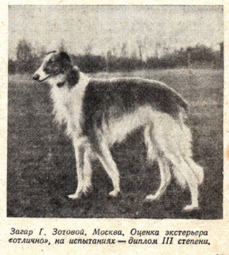 https://dogs-history.ru/wp-content/uploads/2021/05/2.png